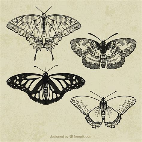 Swallowtail Butterfly Vectors, Photos and PSD files | Free