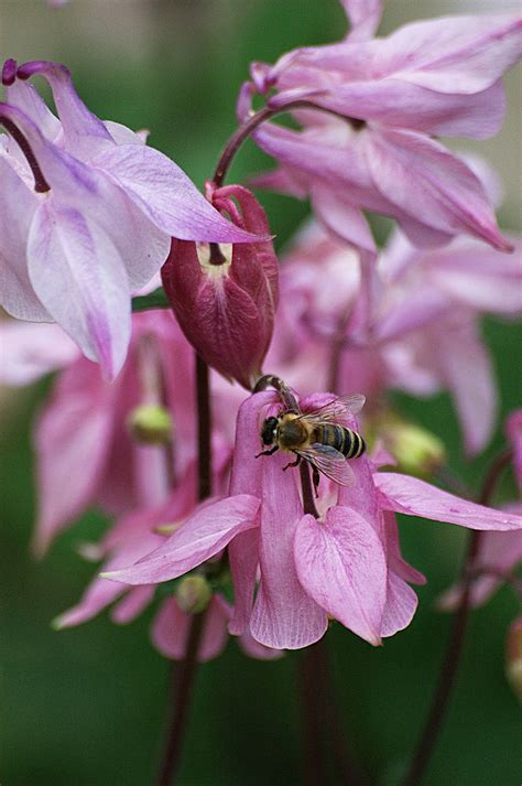 Pink flowers - Wikimedia Commons